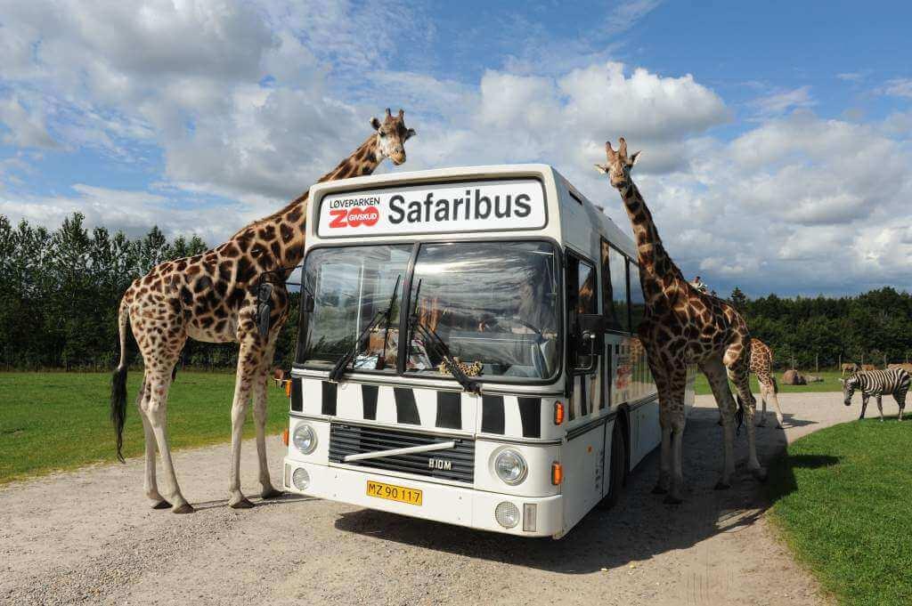 Givskud Zoo nær Hotel Billund